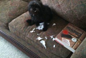 Home Dog Training Montgomery