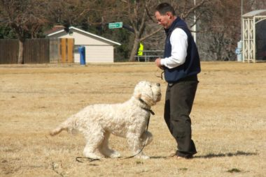 Rick Walkley Dog Trainer