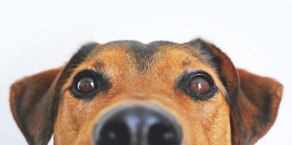 dog training frequently asked questions