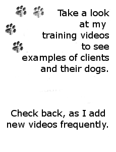 Focus Dog Training