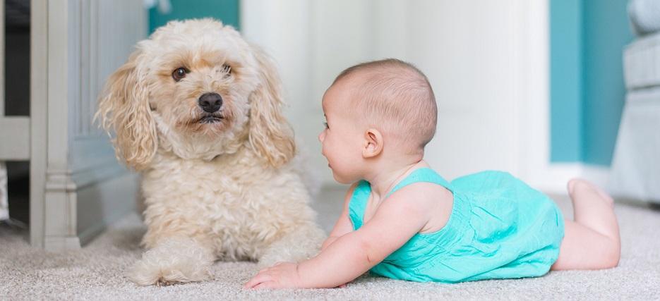 Dog Training Consultation