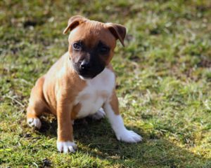 choosing a puppy