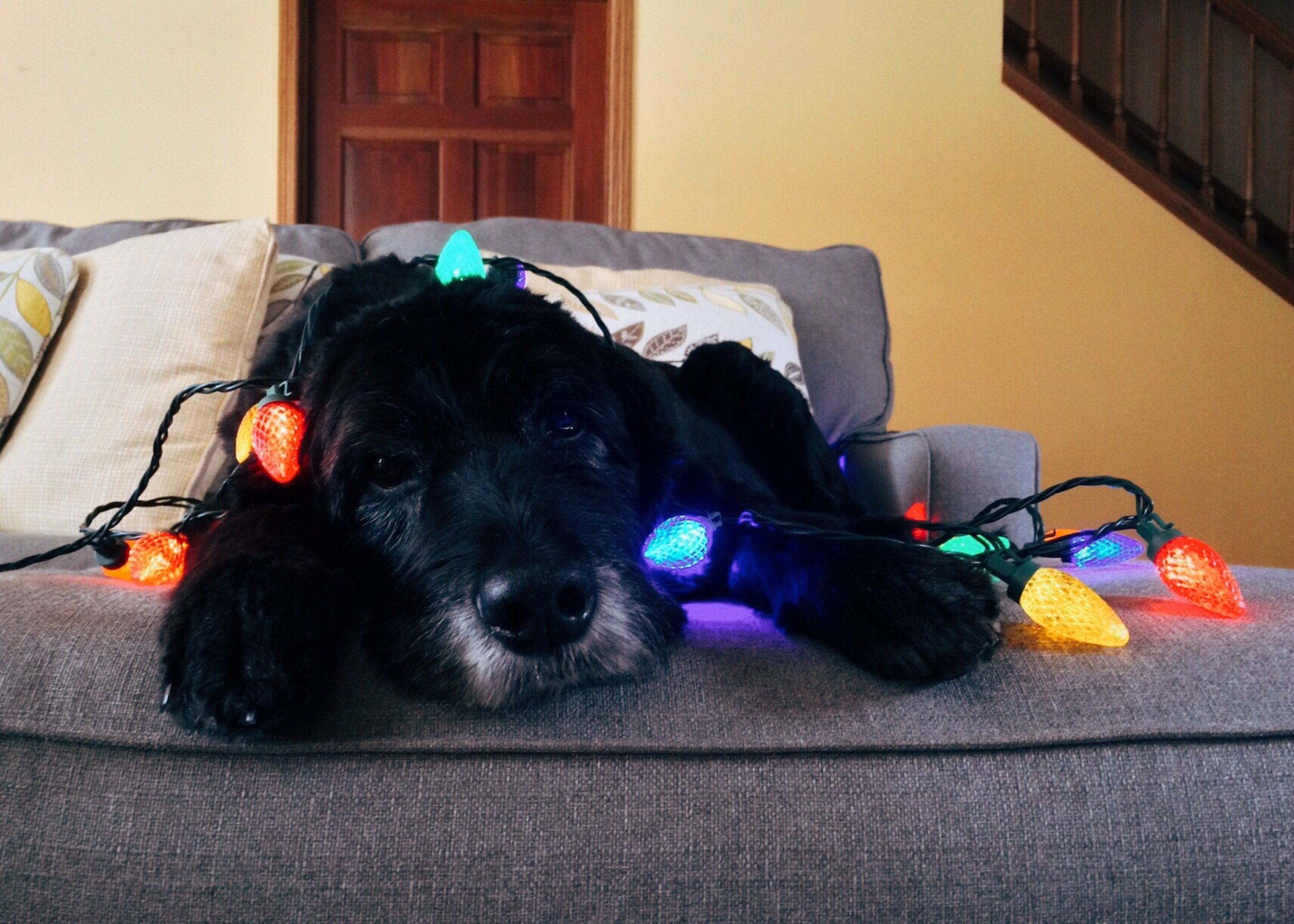 Stress-Free Holiday Season with Your Dog