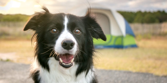 Camping Tips WIth Your Dog