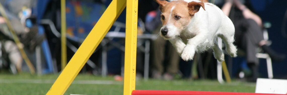 Agility Training Is Great for Anxious Dogs